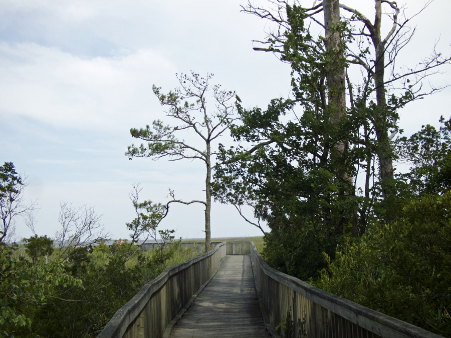 End of the Currituck Reserve Boardwalk Trail leading to Currituck Sound.