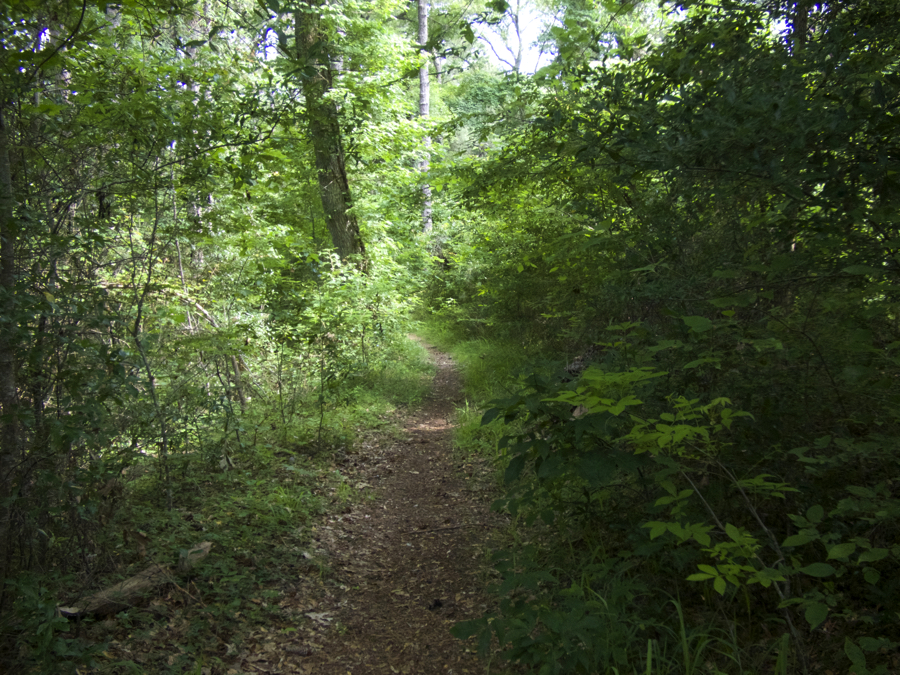Trail in Kitty Hawk Woods.