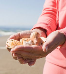 Collecting Shells During the Off-Season