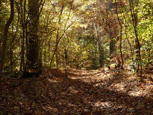Along a hiking trail in Kitty Hawk Woods.