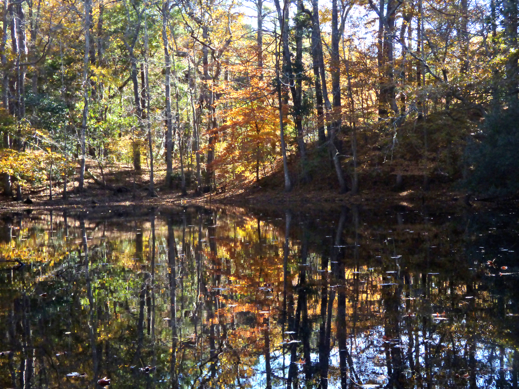 Autumn foliage reflected on a pond in Nags Head Woods.