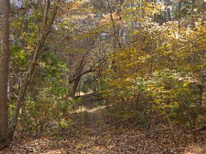 Nags Head Woods in the fall.