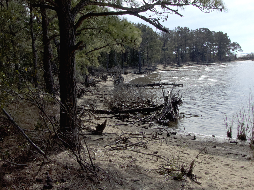 Roanoke Sound side of Jockey's Ridge State Park showing dense maritime forest.