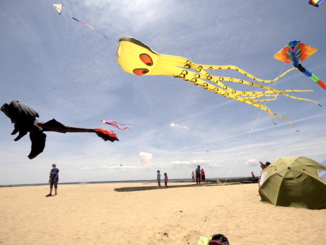Kites flying at Jockey's Ridge State Park during a Rogallo Festival.
