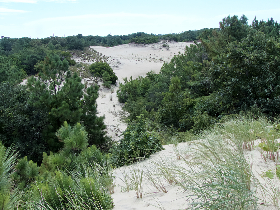 The view from the  top of a dune on the north end of our hidden gem--Jockey's Ridge State Park.