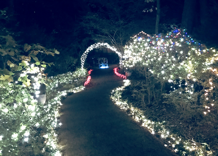 One of the many illuminated paths during Winter Lights at the Elizabethan Gardens.