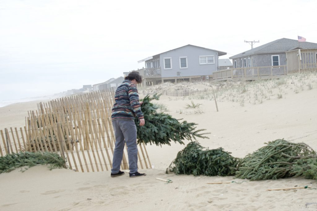 Placing  Christmas trees in Kitty Hawk. A surprising amount of muscle is needed to do it right.
