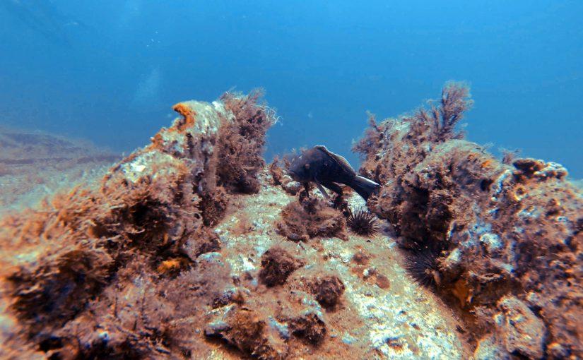 Popular Fish Found Along The OBX Coastline