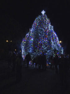 Manteo Christmas Tree after lighting.
